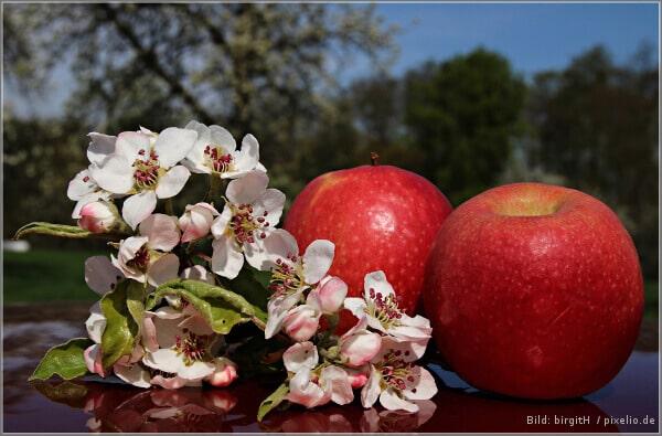 Ganzheitliche Gesundheit - 8 Heilmittel der Bibel